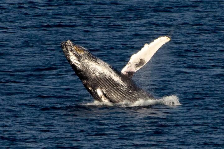 FLATROCK, Newfoundland Playground of the whales