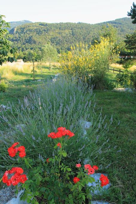 the garden in summer. Le jardin en été.