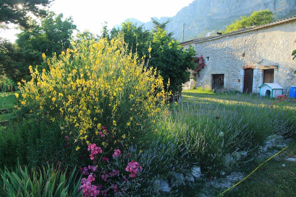 the garden in summer.Le jardin en été.