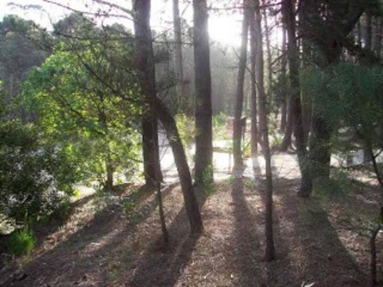En medio de la tranquilidad del bosque