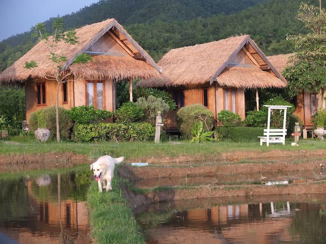 COZY cottage w/breakfast - Rice fields & Mtn view๑