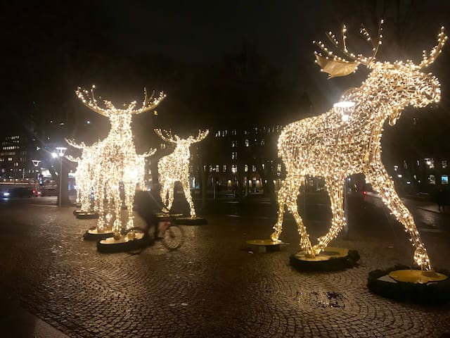 Christmas decorations are everywhere! How about these 5 meter tall Elks?