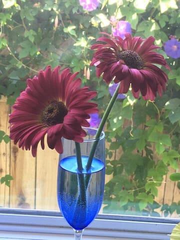 Gebrera daisy's from our garden