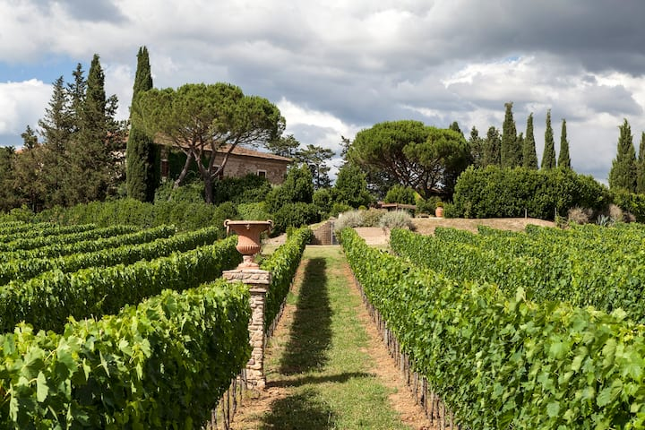 A view of the vineyard