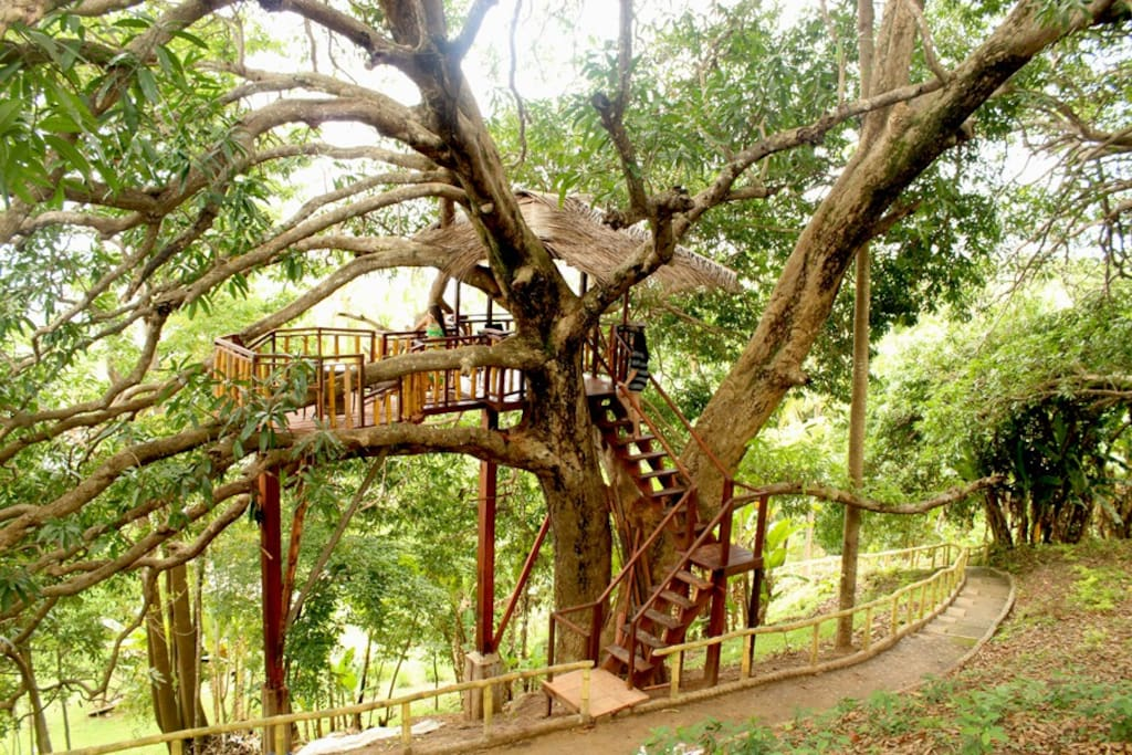 We built a nice Tree House  in our Hundred Year Old Mango Tree where you can witness the Magnificent View of El Nido Bay