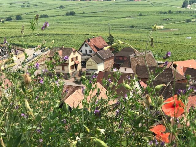 Chambre d'hôtes, domaine viticole alsacien