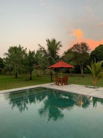 """Beautiful location surrounded by wildlife and coconut trees."""