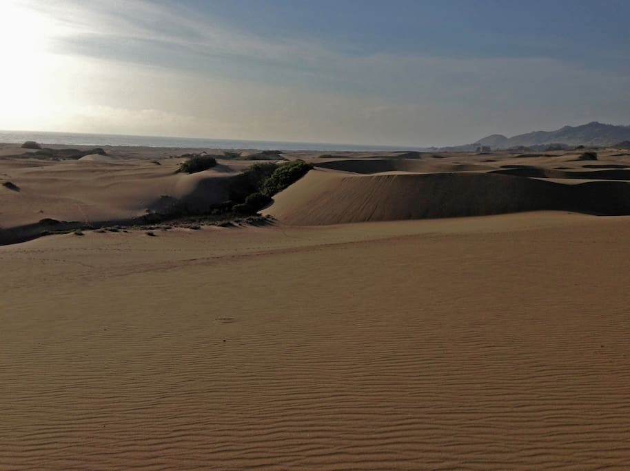 The amazing dunes behind our house. Access is a one-minute drive up Hwy 1.