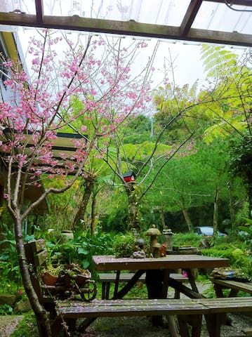 Our front side garden at Cherry Blossom season.