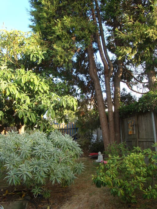 Spacious backyard with fruit trees and plenty of sun