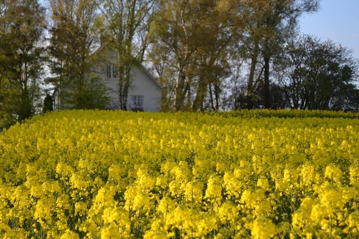 Cottage i Herrgårdsmiljö, Ystad, Österlen, Skåne