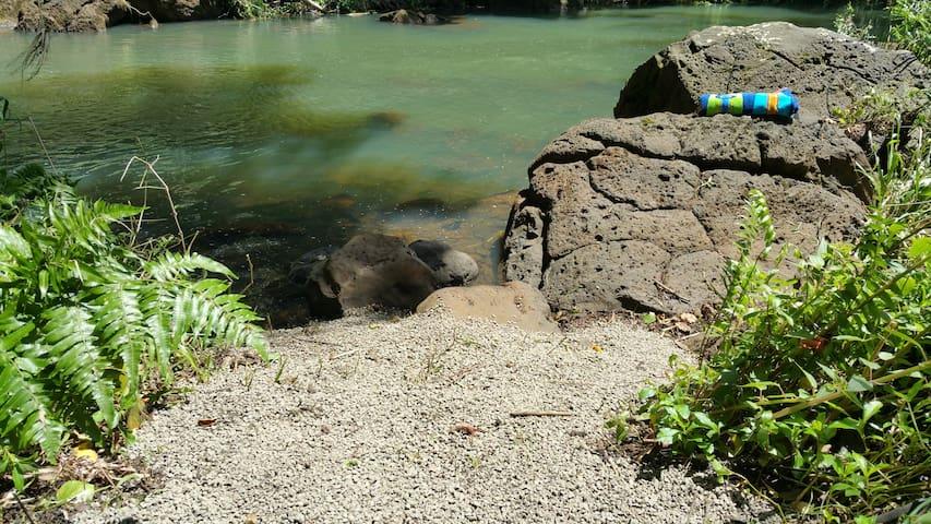 Awesome North Shore Riverfront - Kilauea - Apartment