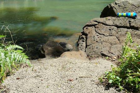 Awesome Kilauea Riverfront Location - Kilauea - Apartmen