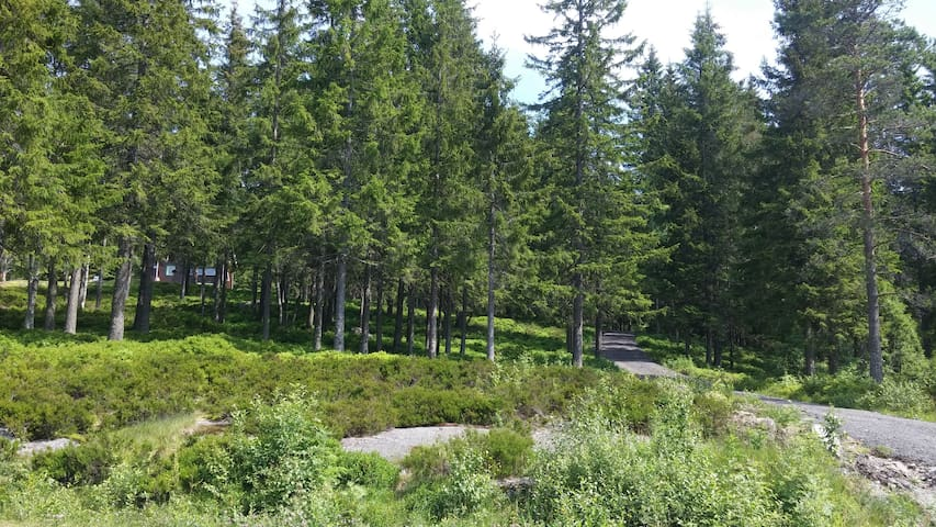 45 min walk to the lake Ørfiske with nice paths in forest