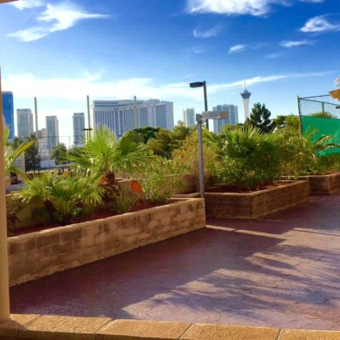 A view of the strip from the back patio.