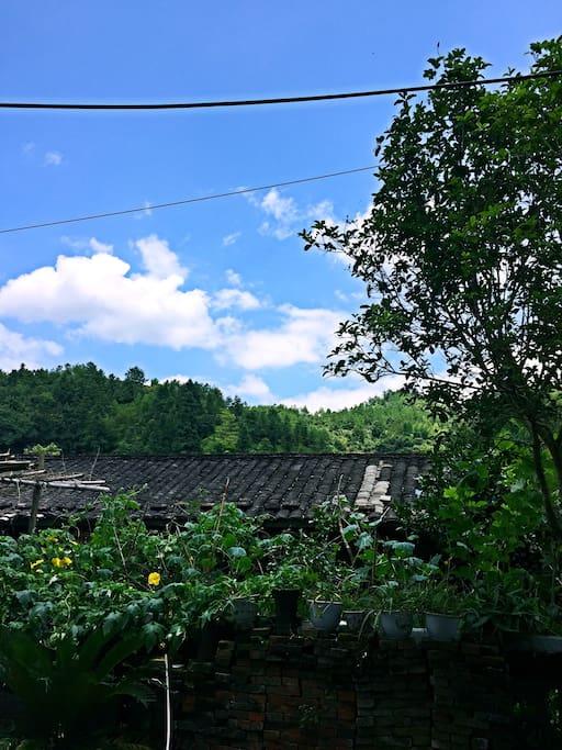 瓜果飘香、四季常青的农家小院!