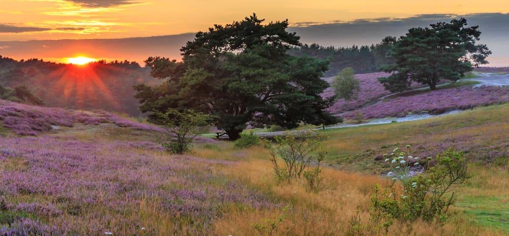 Natuurgebied Brunssummerheide Op 10 min loopafstand heerlijke wandelroutes