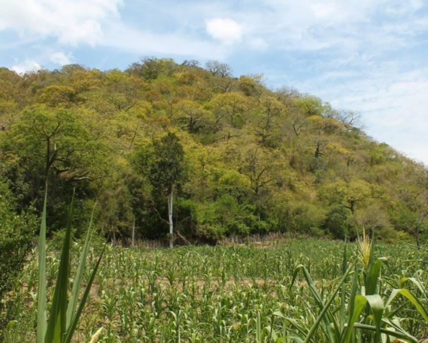 Campos de cultivos y bosque seco