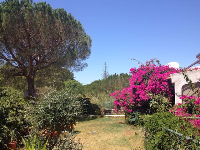 Relax in Beautiful Rural Algarve - Algoz - Haus