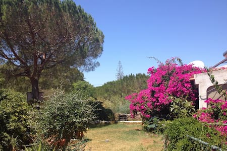 Relax in Beautiful Rural Algarve - Algoz - Dom