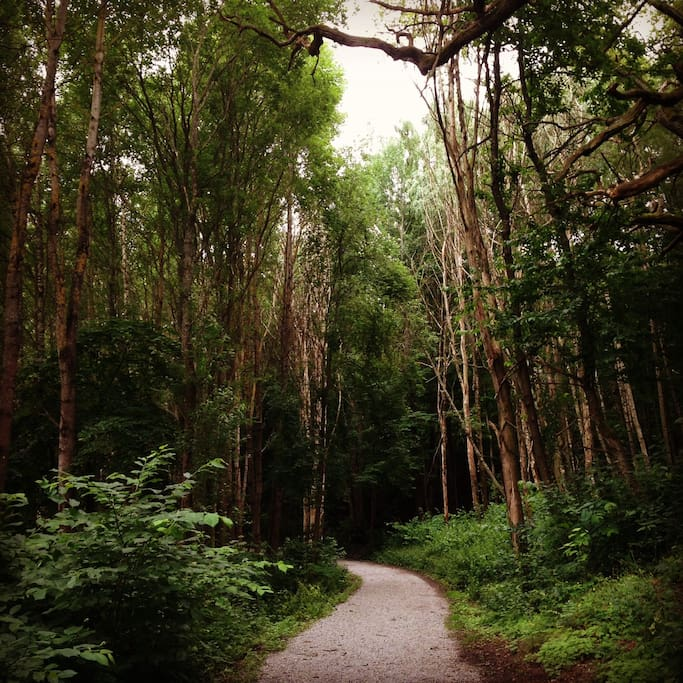Bergshamra is perfect for jogging or walking in the forest and by the lake.