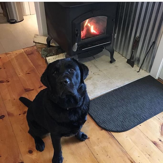 Rory is the dog in residence, pet friendly welcome if your dog is well behaved...
