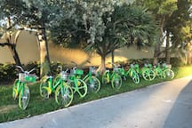 Lime Bikes Located Next To The Island Security Gate