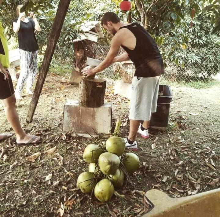 visitors cut coconut at our farm