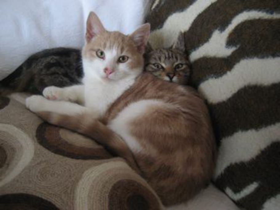 Our lovely cats Roo and Red