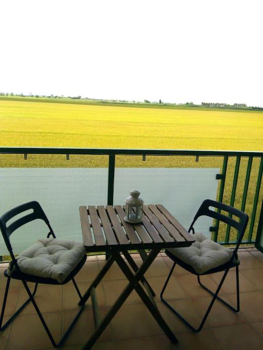 Terraza con vistas a los arrozales