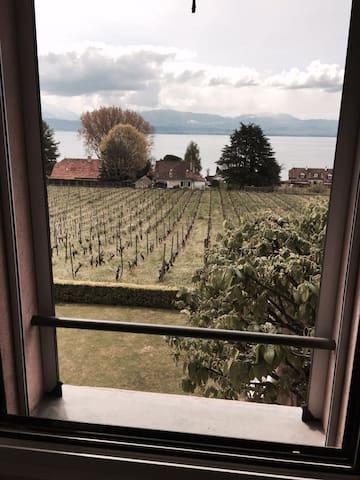 STUDIO avec vue sur le lac et les vignes - Buchillon - Apartamento