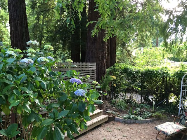 Privacy, Sunshine & Redwood Trees! - Larkspur - Huis