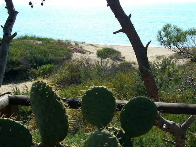 yucca location, in the seaside villa. - Galípoli
