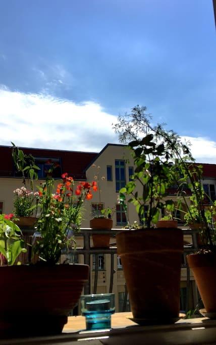 Freie Sicht vom Balkon in die ruhige Sackgasse