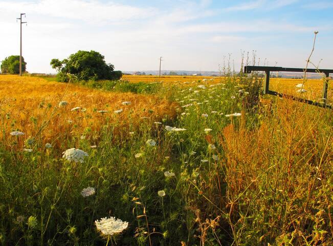 THE FARM campo di grano