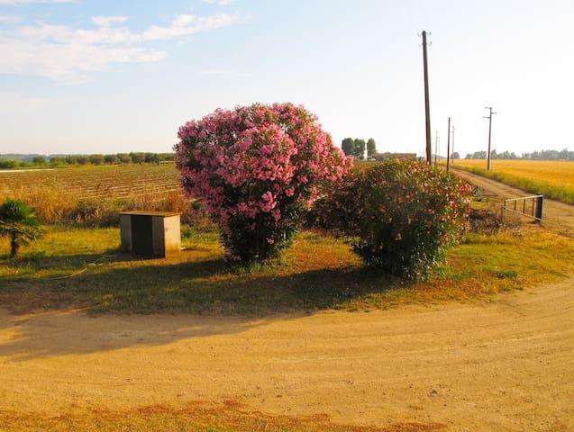 THE FARM strada all'interno dell'azienda