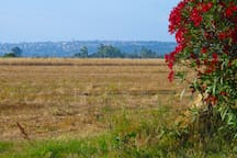 TARQUINIA VIEW FROM THE GARDEN 6 KM