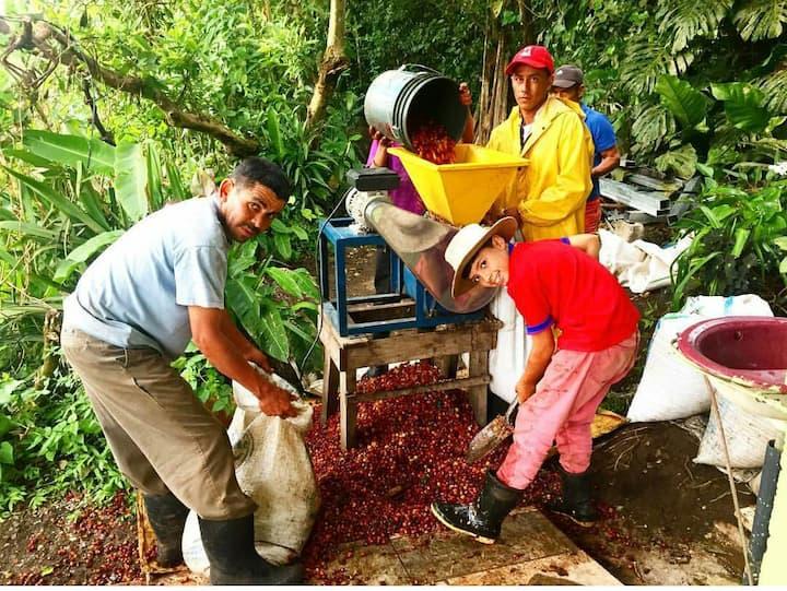 Cabin on Monteverde Coffee Farm #2