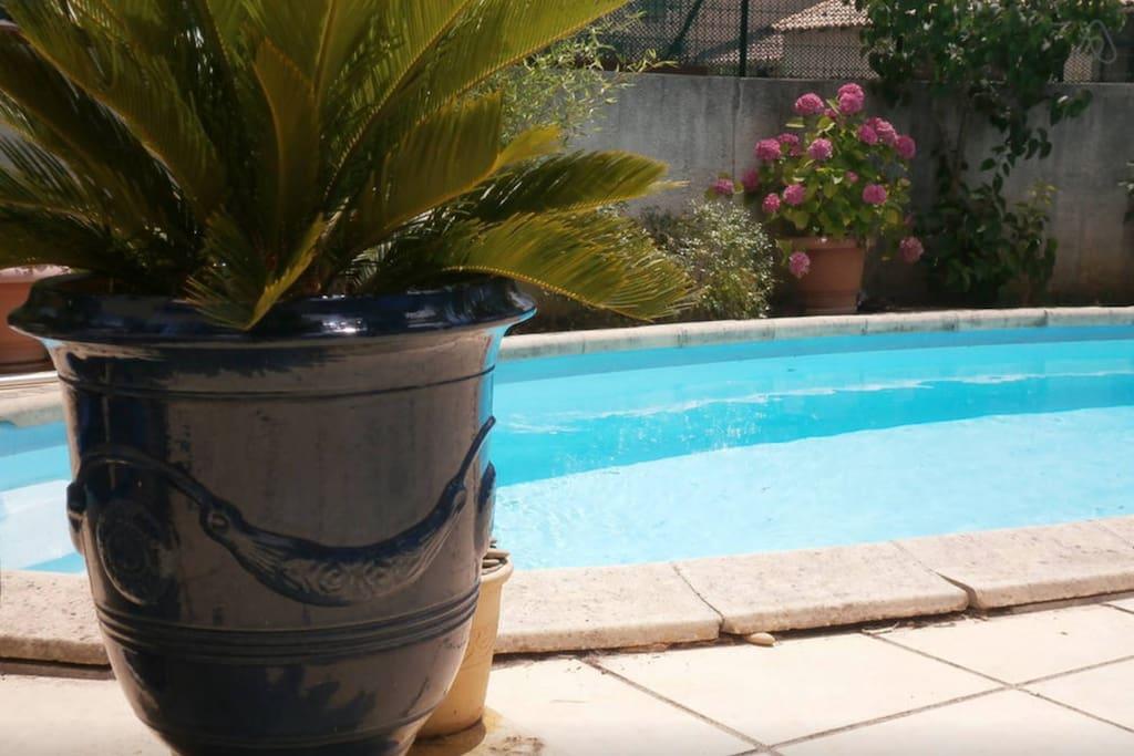 Chambre d 39 h tes 2 piscine ptit d j chambres d 39 h tes for Piscine privee montpellier