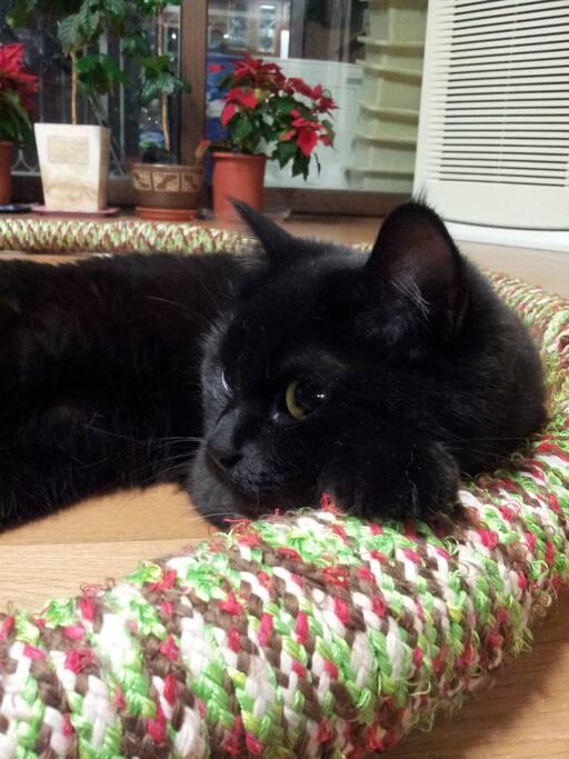 집주인 역활을 하는 비앙카-수줍음이 많은 고양이