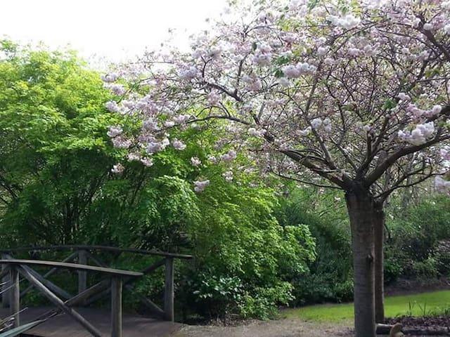 Bridge leading to cherry blossom avenue.