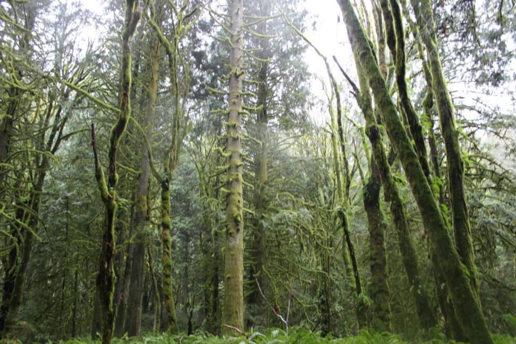 Go hiking in the woods and see the mossy greenery.