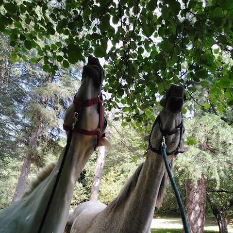 calme et sérénité entre Toulouse et les Pyrénées