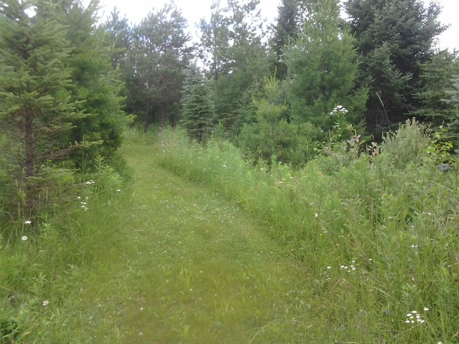 Trail to Cabin