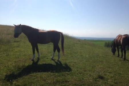 Værelse på hesteejendom - tag din hest m. på ferie - Knebel