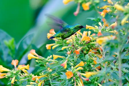 Hummingbird garden and Coffee farm