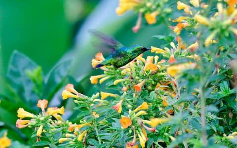 Hummingbird garden and Coffee farm