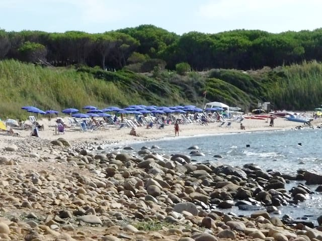 Loungers And Parasols For Hire On The Beach