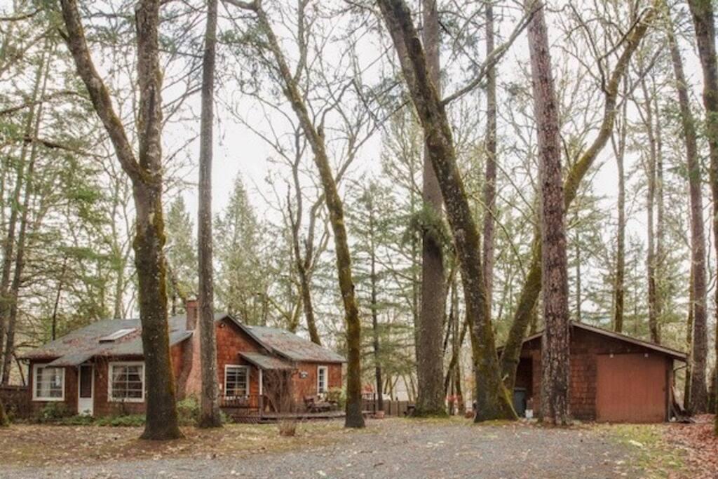 Cozy cabin in the woods...