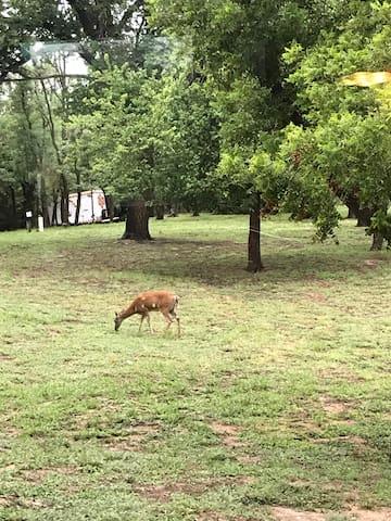 Back yard. Often deer and turkey.